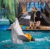 Дельфинарии, океанариумы в Старощербиновской