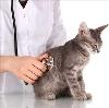 Ветеринарные клиники в Старощербиновской